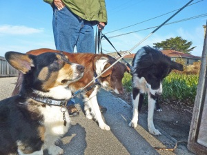 dog posse