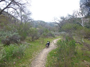 Sunol walk with Ranger the Corgi