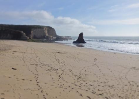 "Ranger the Corgi hides in a hole at the beach. He calls it ""Ranger's Retreat"""