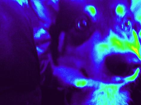 wacky filter on corgi face