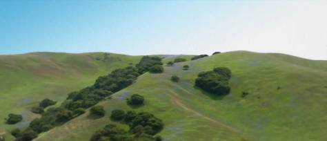 Hillsides with lupines Fort Ord National Monument.